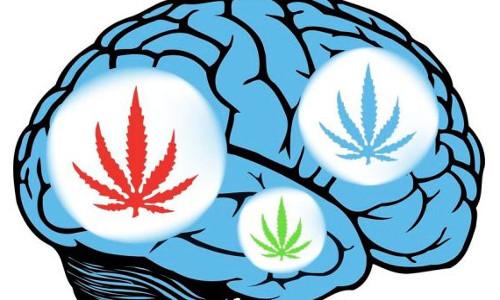 cannabis-cerveau